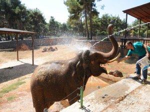 Sıcaktan bunalan filler, çamur banyosu ile serinliyor