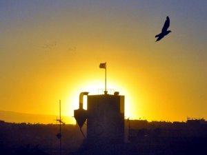 Güvercinlerin batan güneşle dansı
