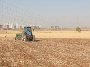 İthal buğday isyanı