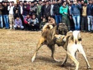 Köpek dövüştürenlere 5 bin 504 lira para cezası