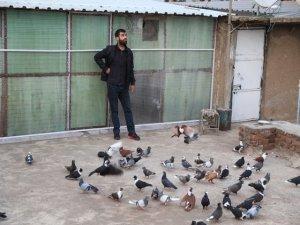 İkinci el araba fiyatına güvercinler podyuma hazırlanıyor