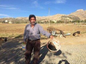 Ergani'de 480 tavuk telef oldu