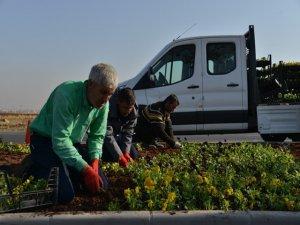1 milyon 500 bin kışlık mevsimlik çiçek dikiliyor