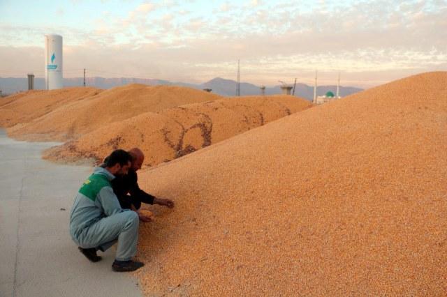 Kızıltepe'de mısırın fiyat kargaşası