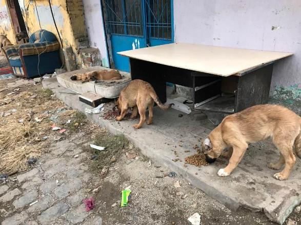 Hayvanseverler, yasaklı mahallelerdeki hayvanları doyuruyor