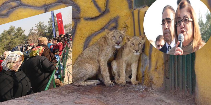 Erdoğan'a hediye edilen aslanlar Gaziantep'te