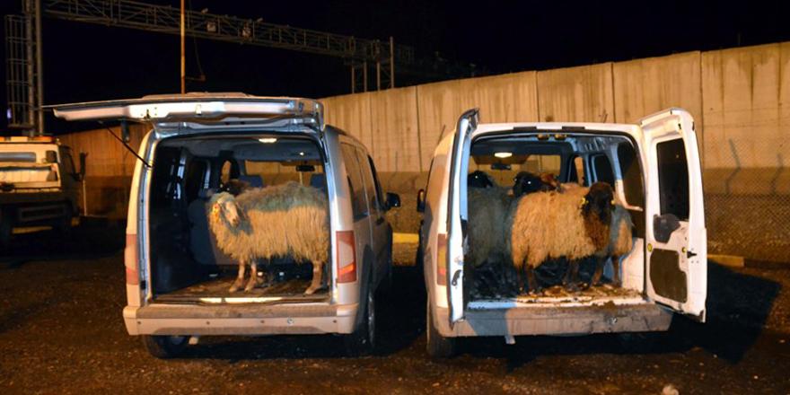 Silvan'da çalınan koyunlar Bismil'de yakalanıldı