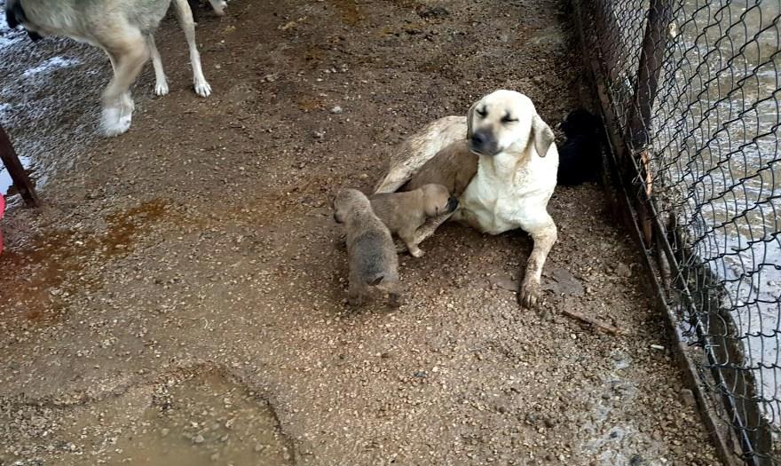 Hayvan hakları savunucularından tepki