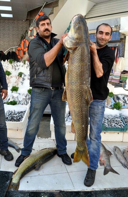 Botan Çayı'nda 157 kiloluk turna balığı yakaladı