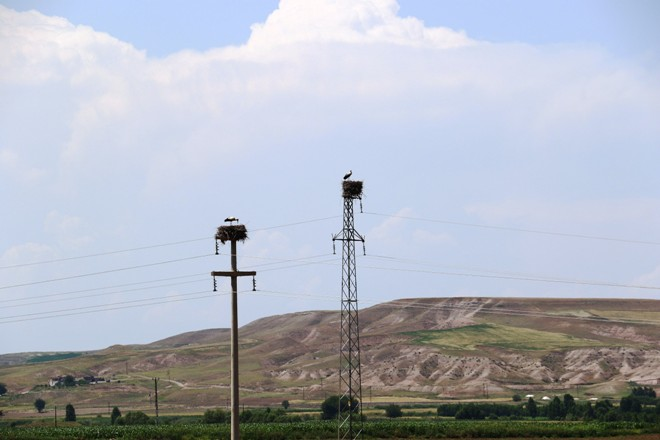 Türkiye'deki kuraklık Afrika'daki kuş türlerini de etkiliyor