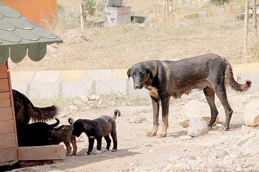Hayvanlara 5 yıldızlı hizmet