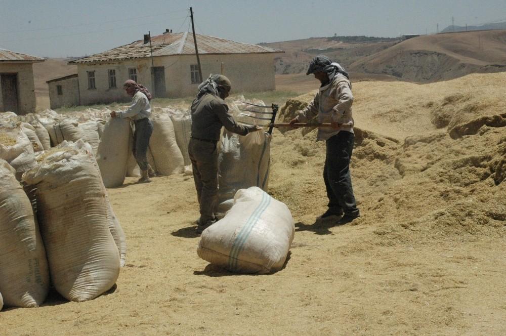 Siirt'te 50 Bin Ton Hububat Alımı Gerçekleştirildi