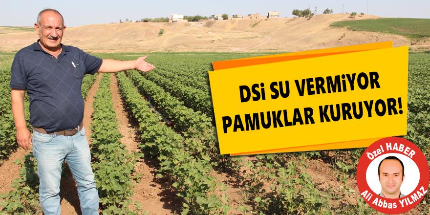 DSİ Su vermiyor pamuklar kuruyor!