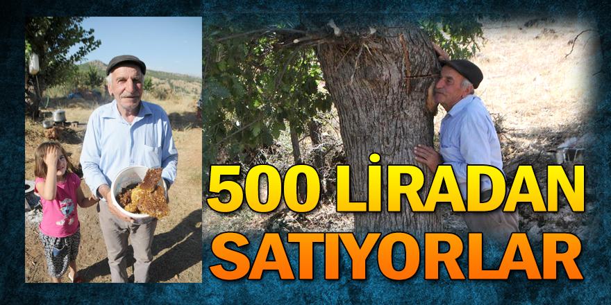Ağaç kovuklarında bulup 500 liradan satıyorlar