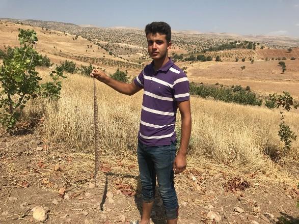 Bahçe ve tarlalarda yılan paniği