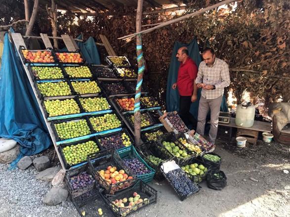 Ekonomiye incir ve nar desteği