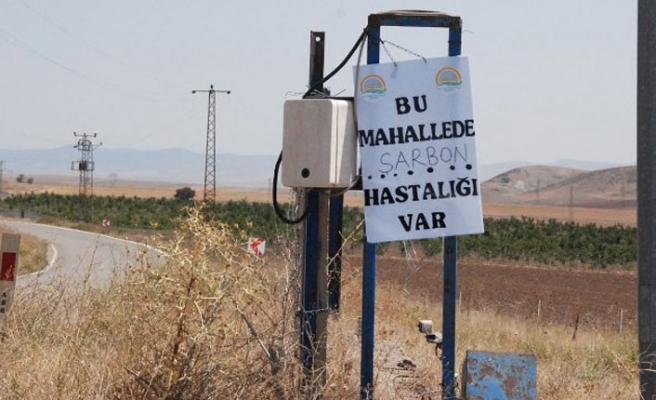 Şarbon, Bitlis'te de görüldü!