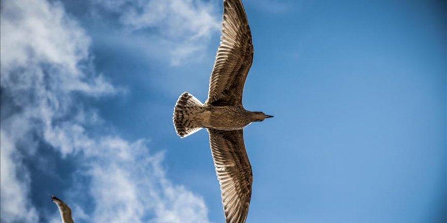Sarhoş kuşların yaptığına bak!