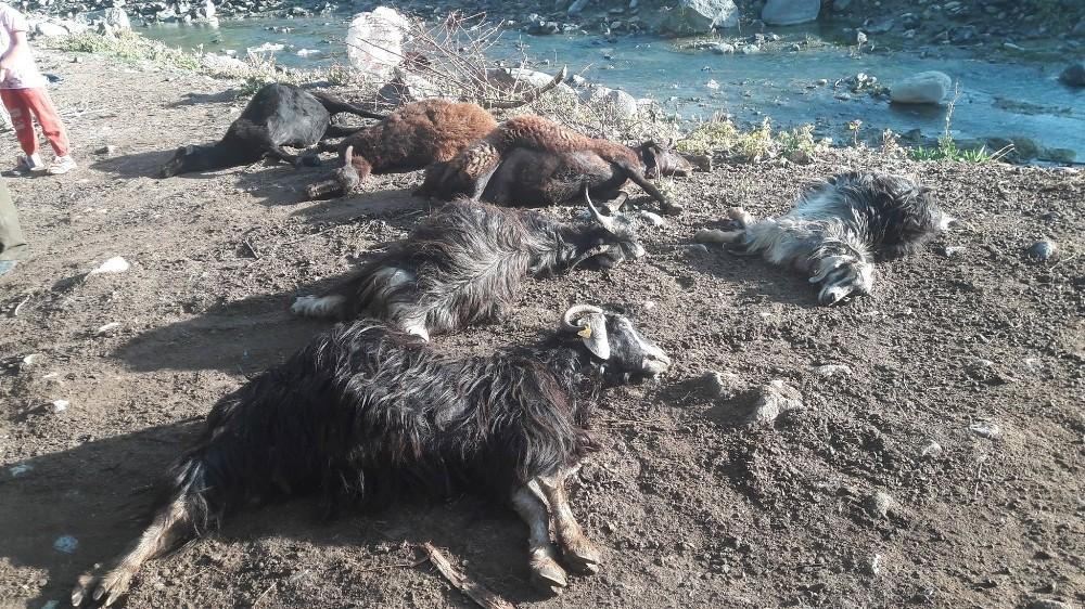 Kurt ağıla girdi; 24 hayvanı telef etti!