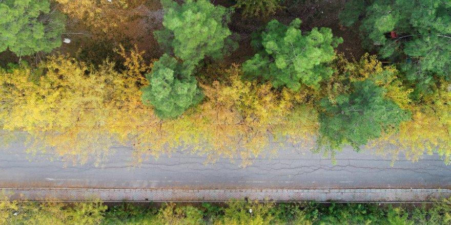 Saklı Cennet sonbahar renklerine büründü