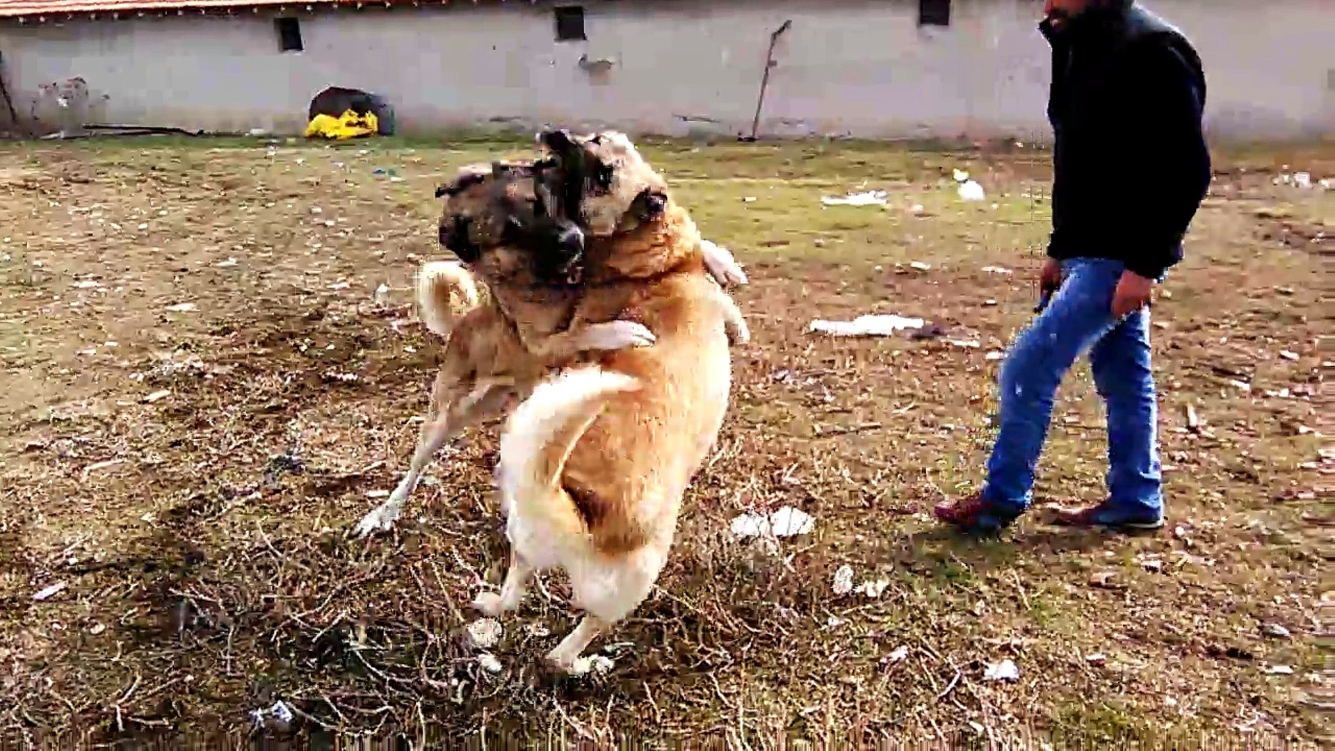 Hani'de köpeğe akıl almaz işkence!