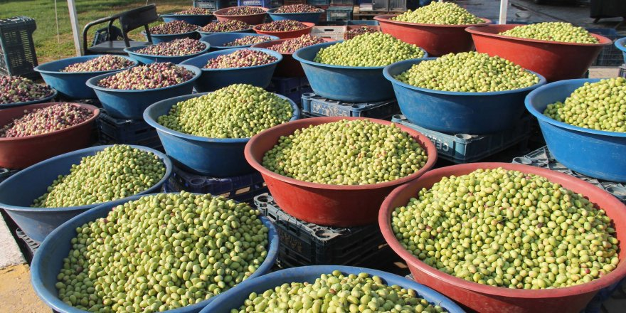 Şanlıurfa'da yeni mahsul zeytinler tezgahta