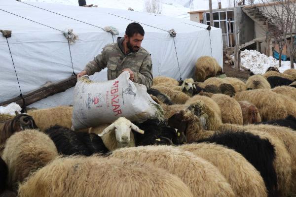 VİDEO-  Bitlis'te Besicilerin Zorlu Kış Mesaisi Başladı