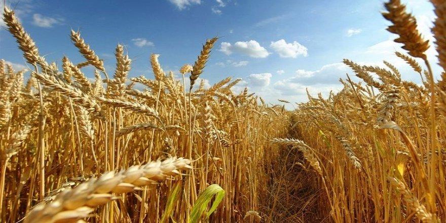 Türkiye en çok tahılda kendine yetemiyor