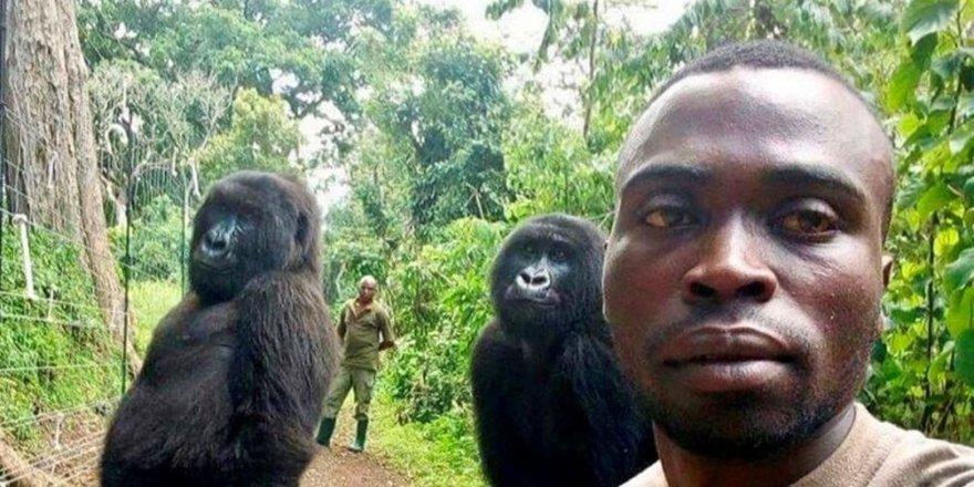 Gorillerden selfie