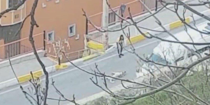 Yol ortasına yatan sokak köpeğini  genç kız nasıl ikna etti?