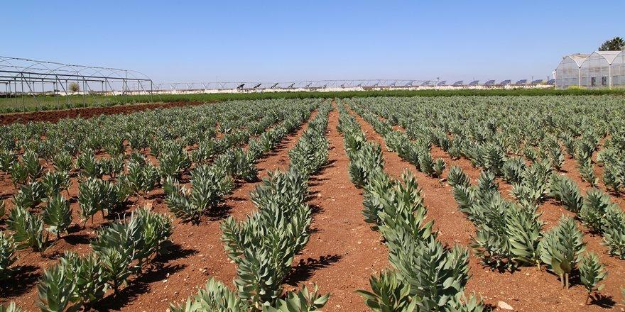 Doğu'nun endemik bitkileri koruma altına alındı