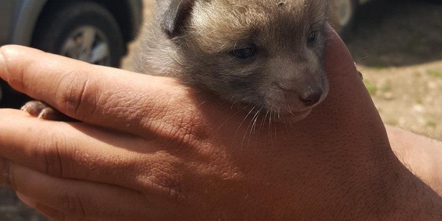 Diyarbakır'da bulunan yaban hayvanlarına sahip çıkıldı