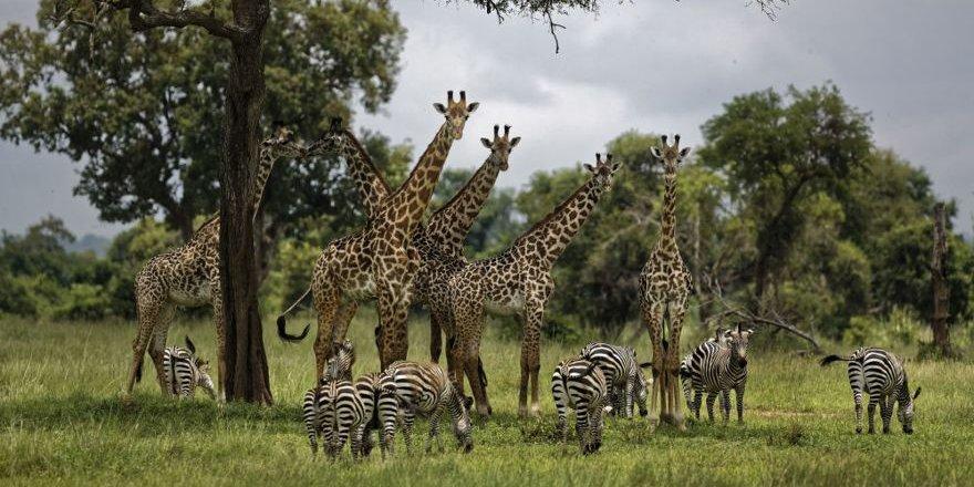 1 milyona yakın hayvan ve bitki türünün yok olma tehlikesi