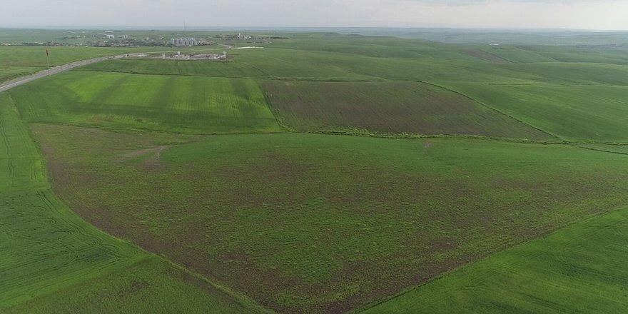 Diyarbakırlı çiftçileri aşırı yağış olumsuz etkiledi