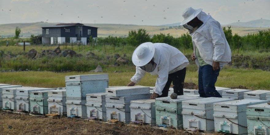 Arıcılara güneş enerjili baraka