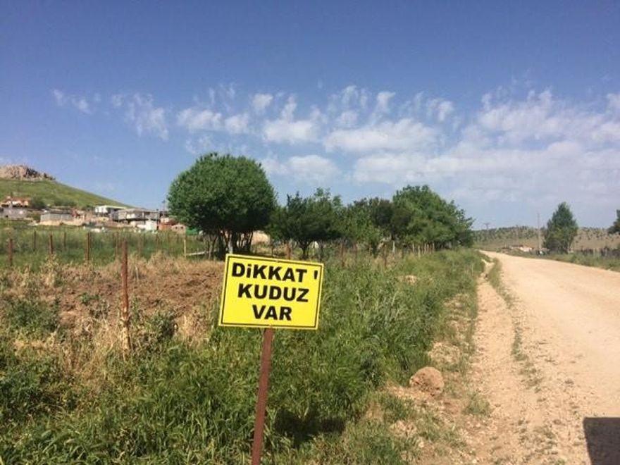 Diyarbakır'da kuduz paniği ! Koyun kuduz çıktı