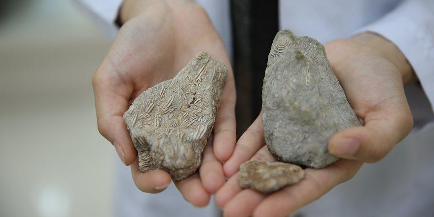 50 milyon yıllık fosil Diyarbakır'da