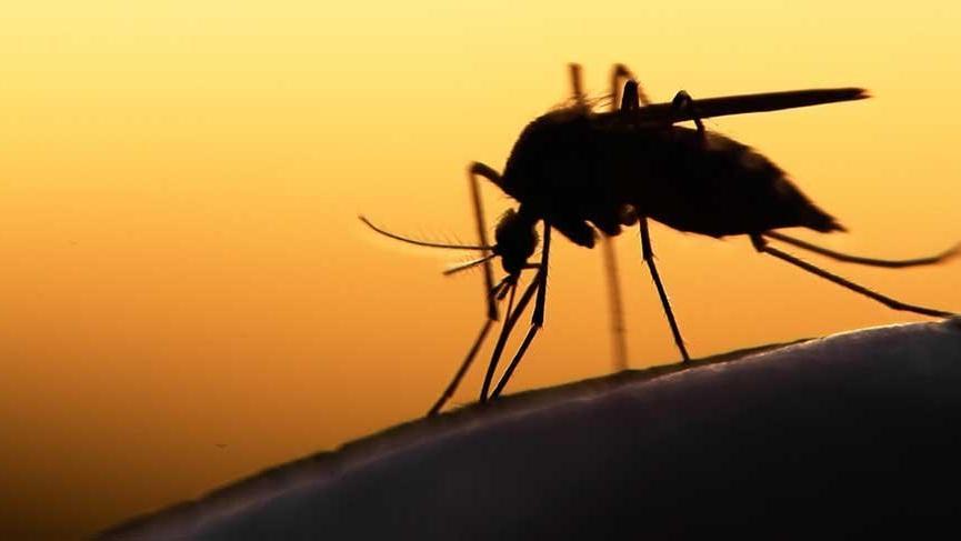 Diyarbakır'da sivrisinek ve böçek istilası