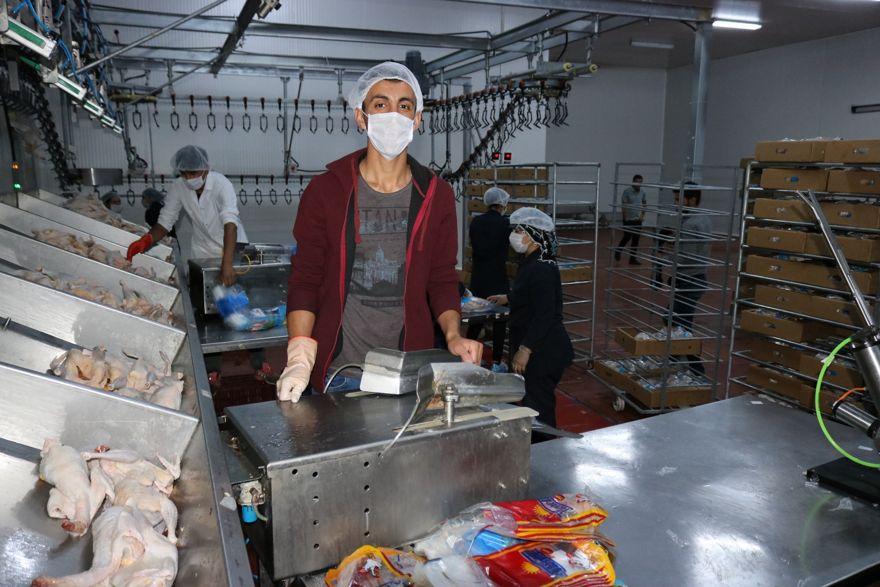Eğil'den Avrupa ve Afrika'ya tavuk ihracatı