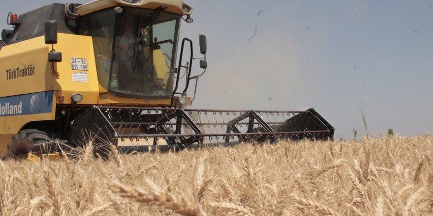 Diyarbakır'da buğdayda hasat zamanı
