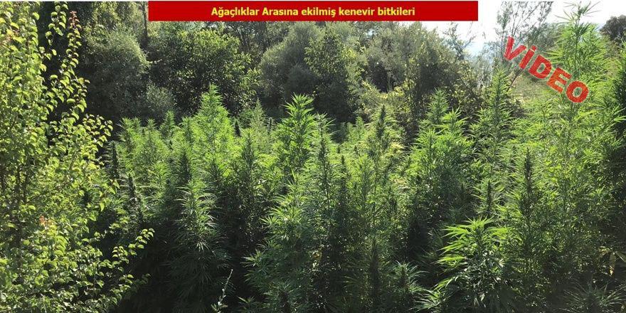 Lice'de yüklü miktarda kenevir bitkisi ele geçirildi