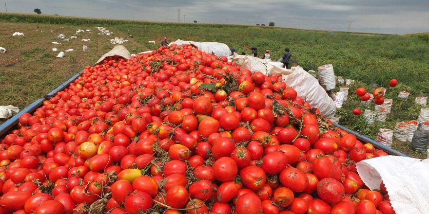 Markette 2.5 TL olan domates, tarlada 30 kuruş