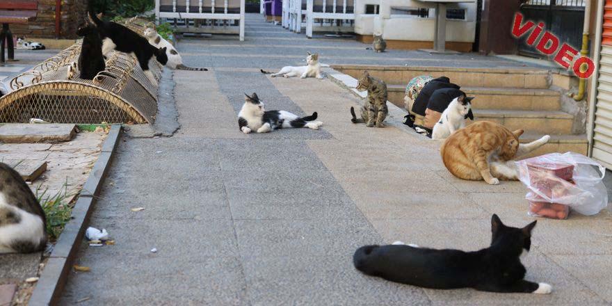 Duyarlı esnaf 8 yıldır her sabah kedilere mama ve sosis veriyor