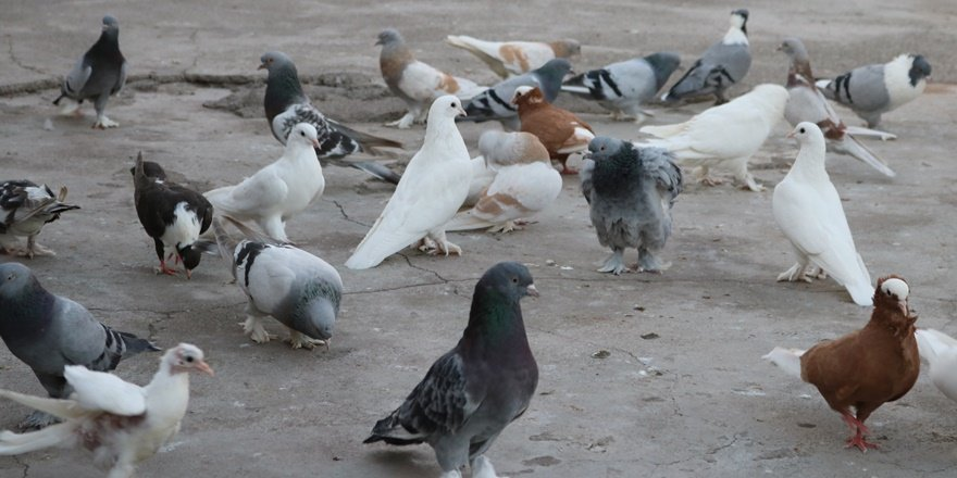 Kuş besleyenler dikkat: Beslediğiniz kuş katiliniz olabilir