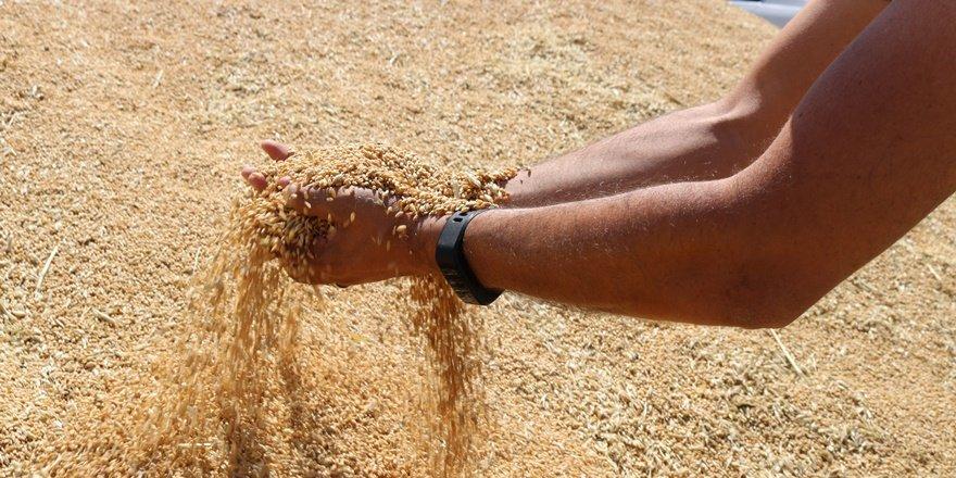 Uzmanlardan ithal tohum uyarısı