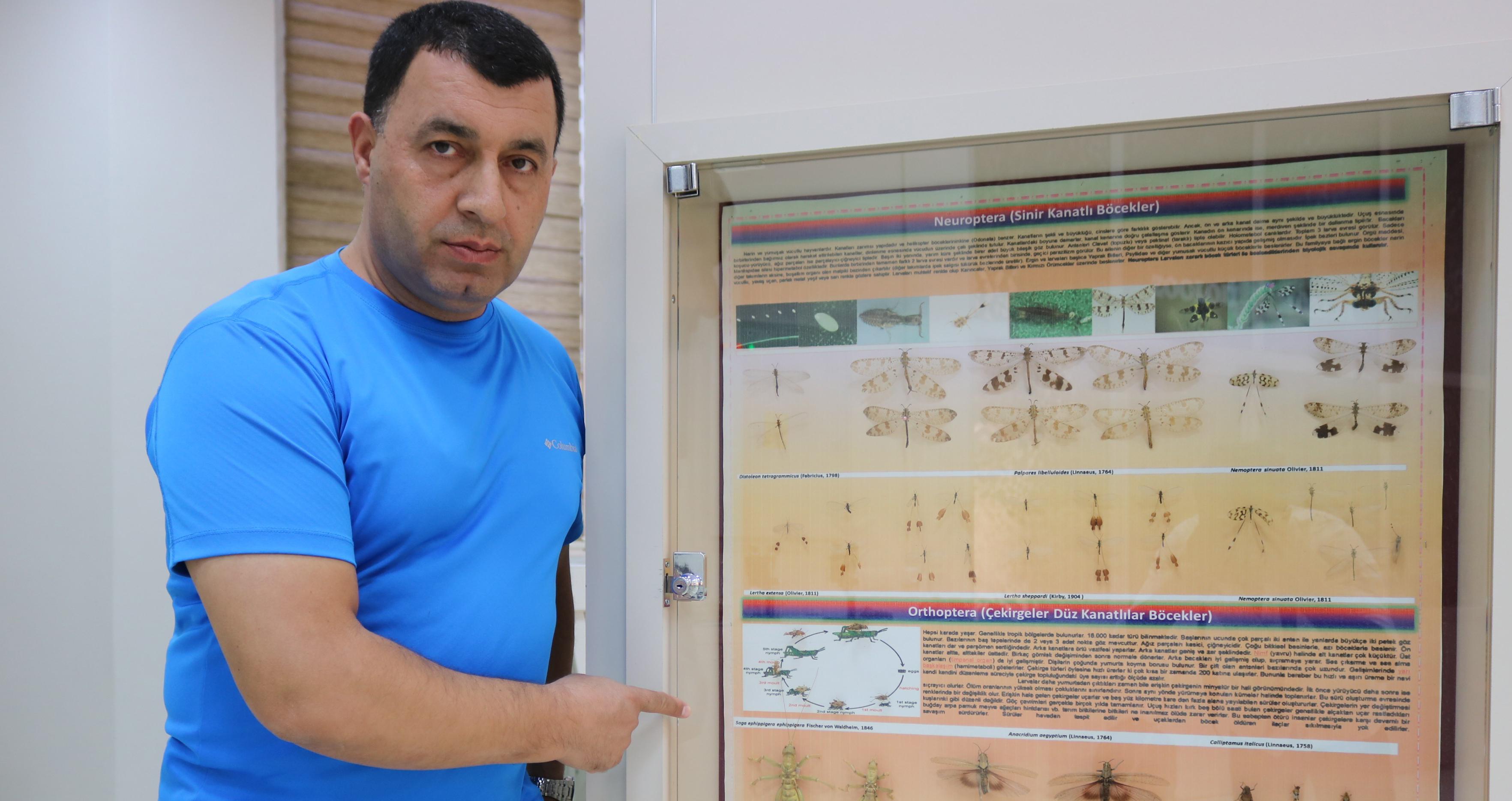 VİDEO-Prof. Dr. Satar'dan çiftçilere çekirge uyarısı