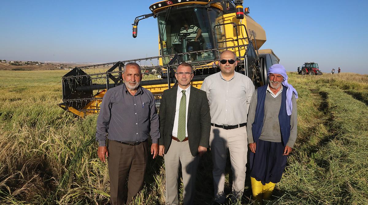 Diyarbakır'da çeltik hasadı başladı