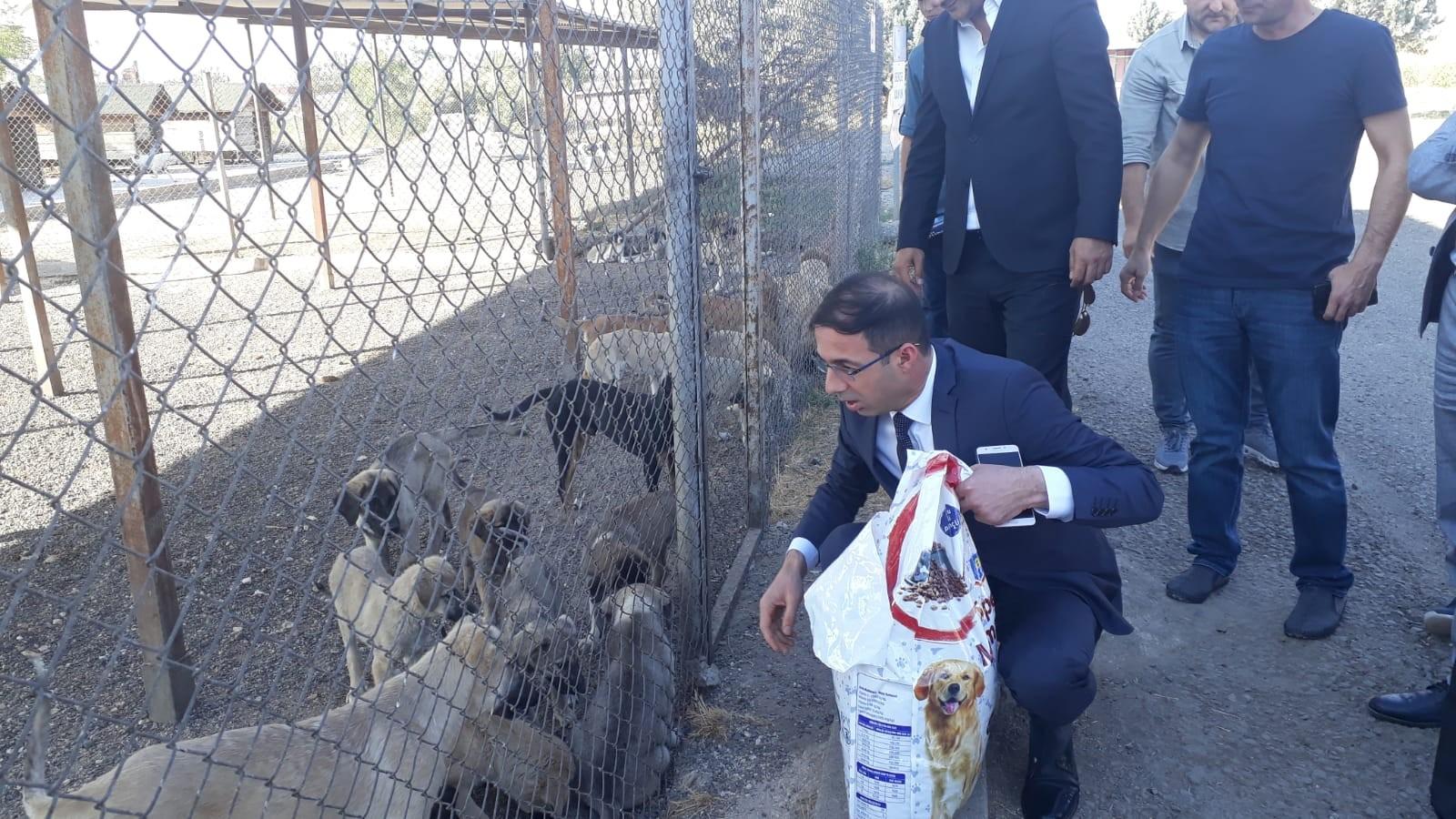 MHP Diyarbakır İl Başkanı: Hayvanların yaşam hakkına saygı duymalıyız