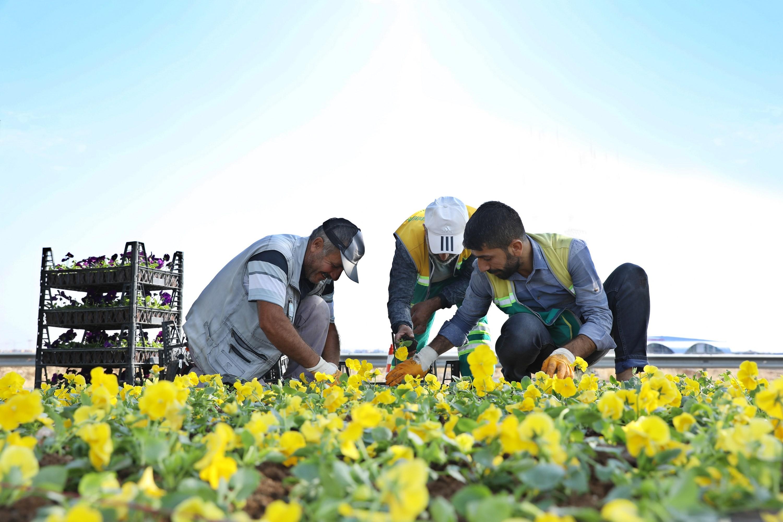 Diyarbakır Belediyesi refüj ve kavşaklara 1 milyon çiçek dikecek
