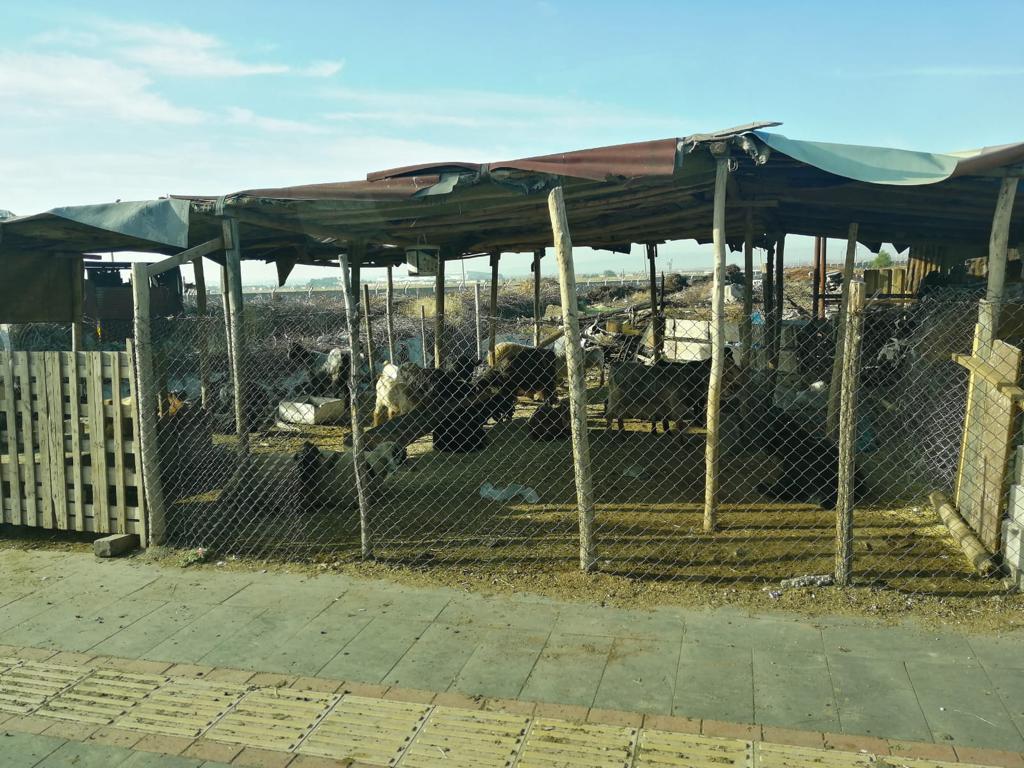 Vatandaşlar istedi Belediye temizledi!